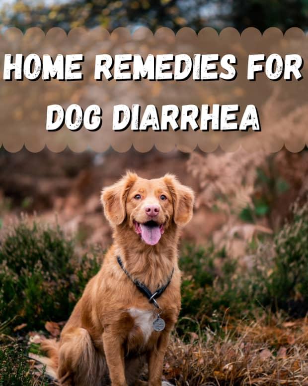 diarrhea-in-dogs