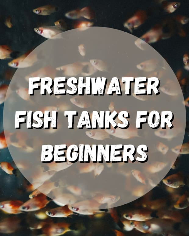 how-to-start-a-freshwater-fish-tank