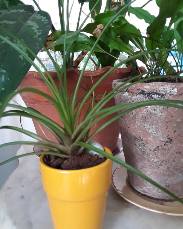 how-to-choose-the-best-pots-for-houseplants