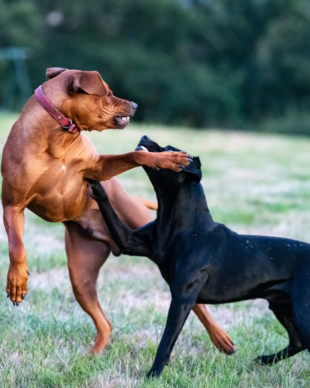why-is-my-dog-aggressive-to-other-dogs