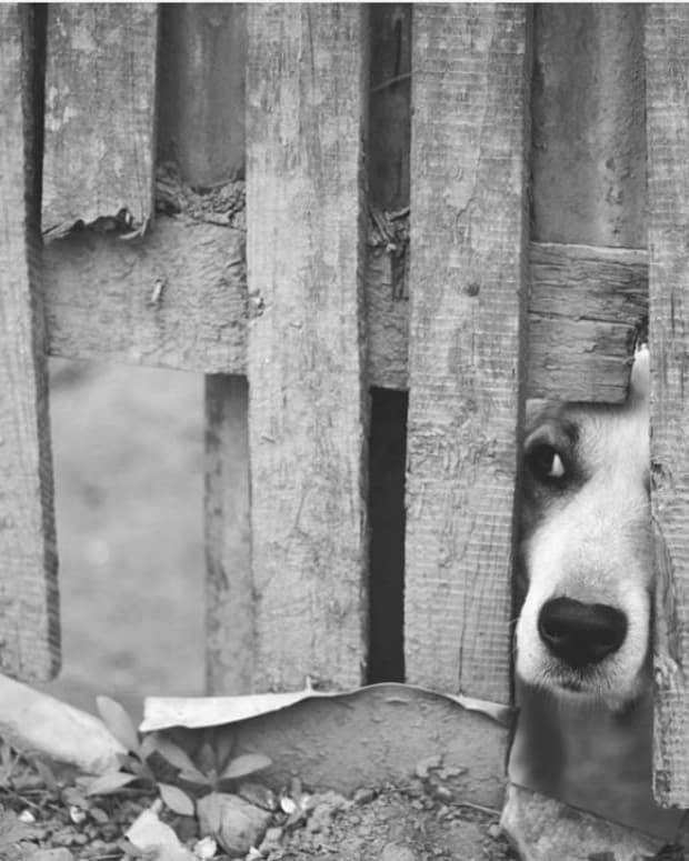 how-to-stop-a-dog-from-squeezing-through-the-bars-of-a-gate