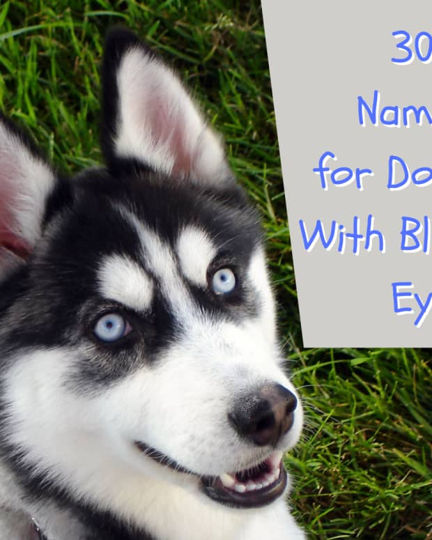 names-for-dogs-with-blue-eyes