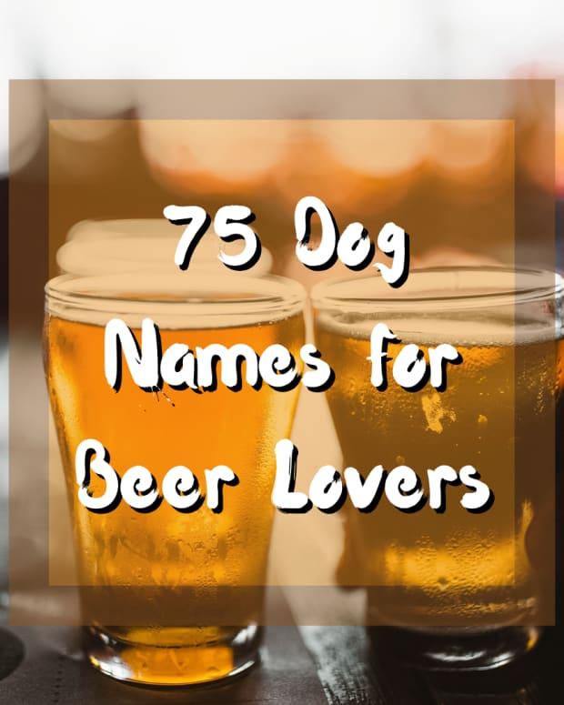 dog-names-for-beer-lovers