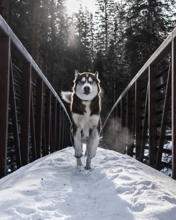 top-5-dog-breeds-for-active-lifestyles