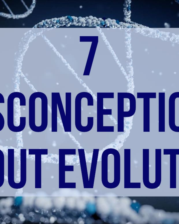 7-things-that-people-get-wrong-about-evolution