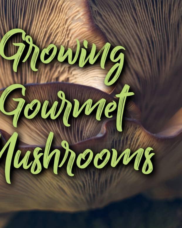 growing-gourmet-mushrooms
