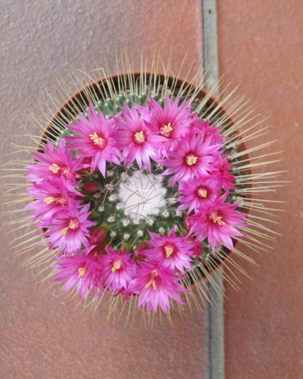 10-most-beautiful-plants-in-the-world
