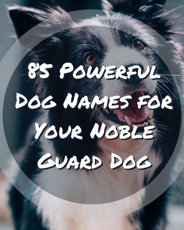 alpha-male-dog-names-20-names-for-strong-male-dogs