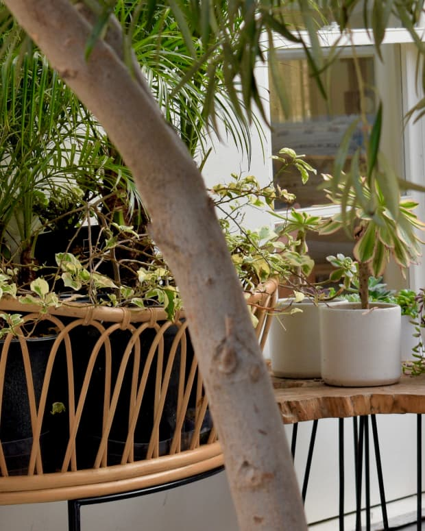 air-purifying-bedroom-plants-that-can-survive-low-light