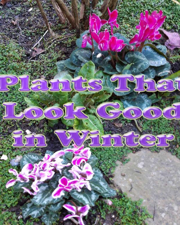 plants-that-look-good-in-winter