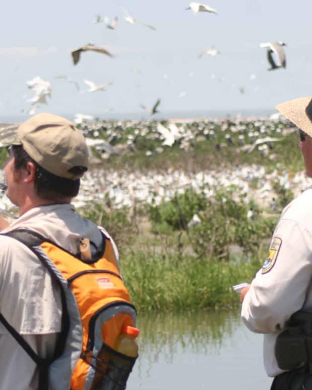 gift-ideas-for-bird-watchers