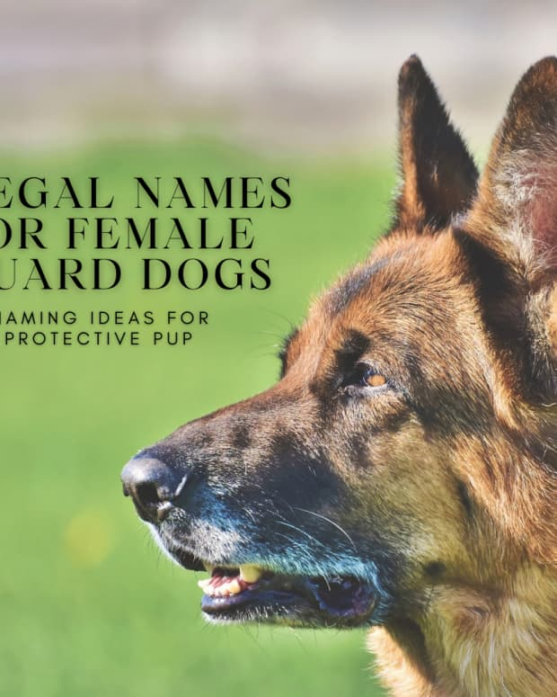 powerful-names-for-your-noble-female-guard-dog