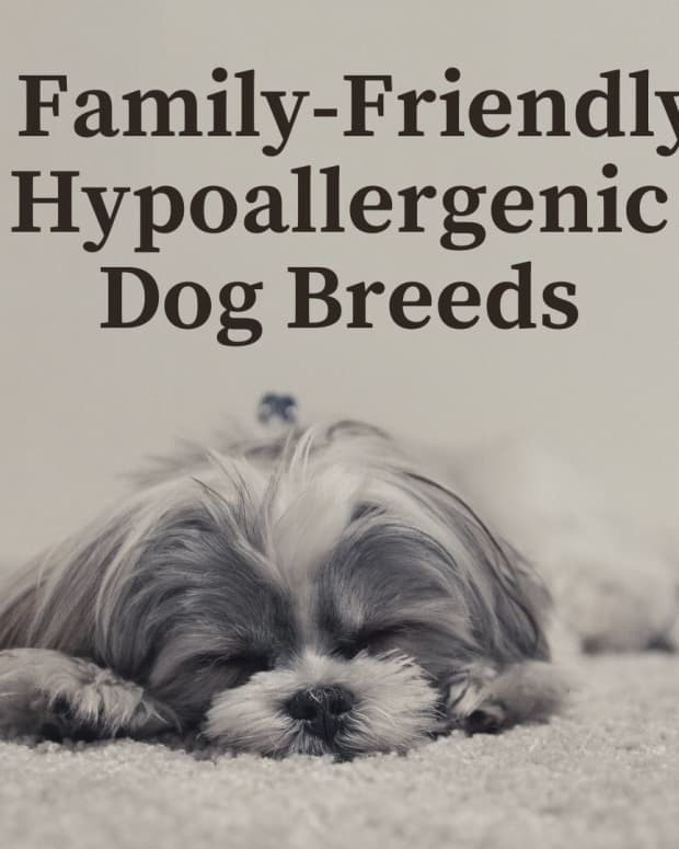 five-hypoallergenic-dog-breeds-great-with-kids