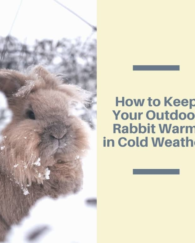 tips-for-keeping-pet-rabbits-outdoors-in-cold-weather