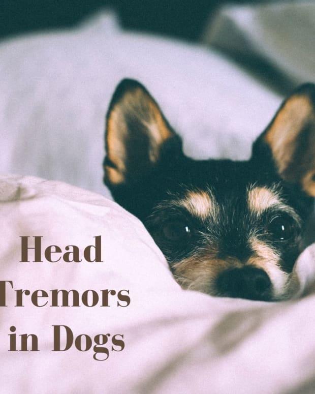 head-bobbing-in-dogs