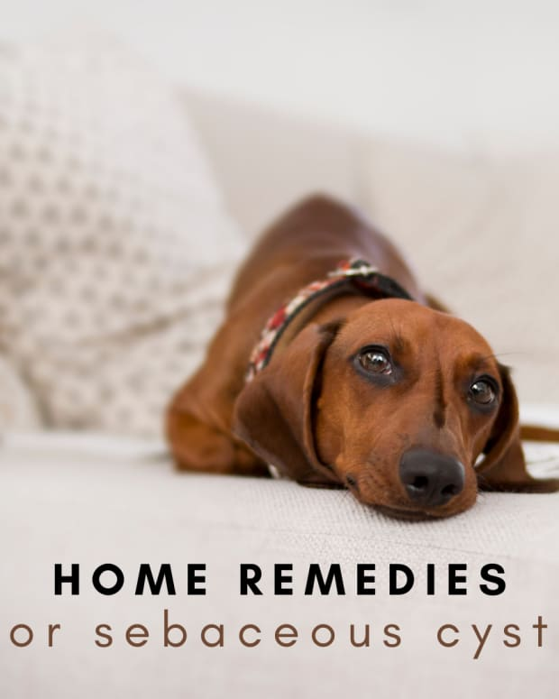 home-remedies-for-dog-sebaceous-cysts