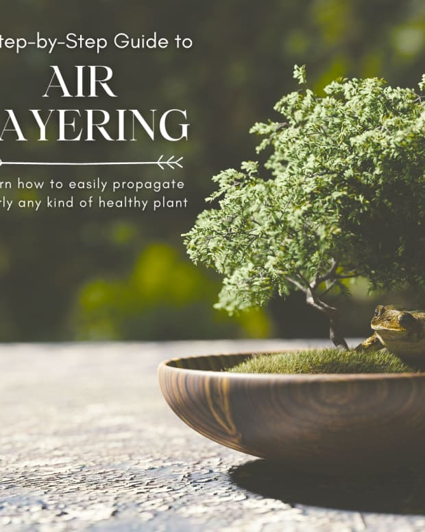 air-layering-a-step-by-step-guide