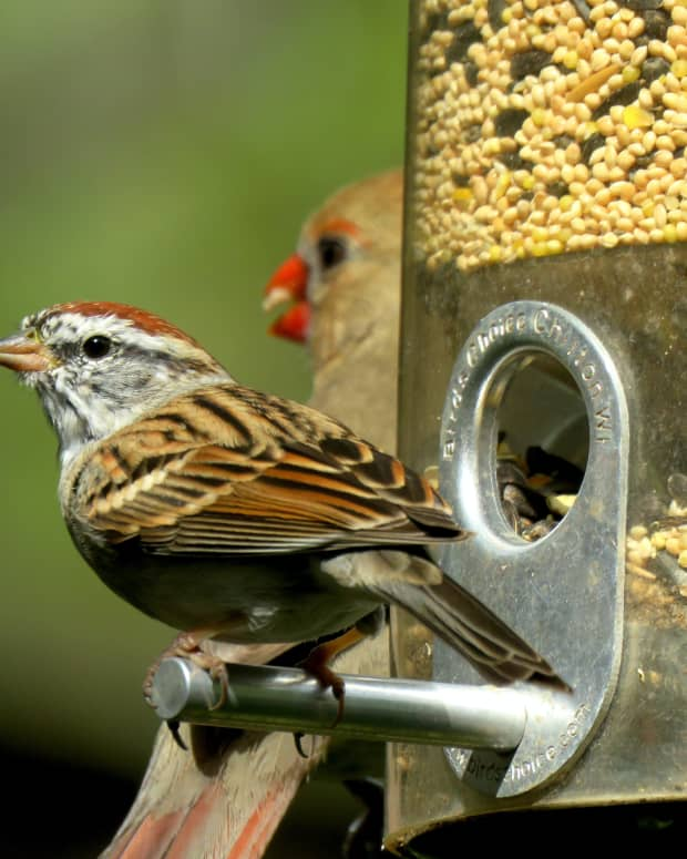 storing-suet-and-wild-bird-seed