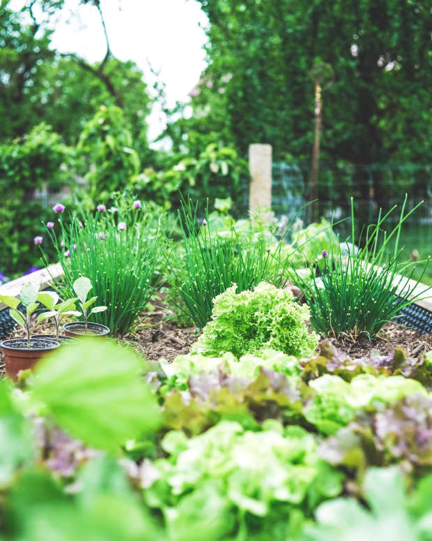 4-easy-organic-ways-to-control-pests-in-your-garden