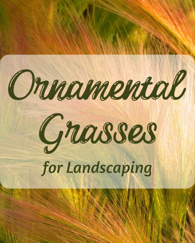 ornamental-grasses-a-unique-landscaping-choice