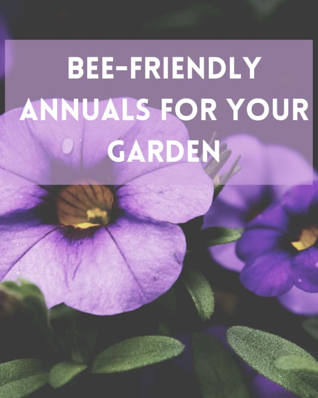 5-best-bee-friendly-annual-flowers-for-your-garden