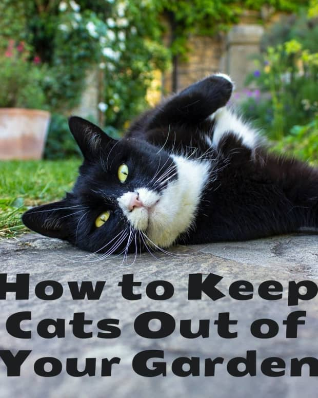 how-to-stop-cats-coming-into-your-garden