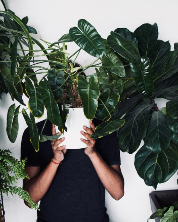 10-ways-to-keep-your-houseplants-healthy-and-alive