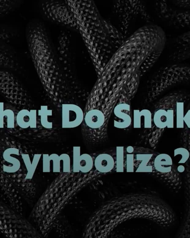 What Do Snakes Symbolize?
