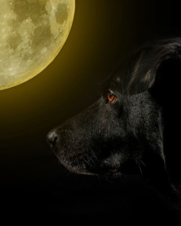 8-superstitions-about-dogs
