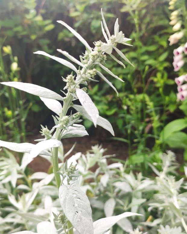 3-best-garden-foliage-plants-for-full-sun