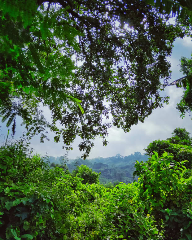 tripura-a-north-eastern-state-of-india-and-an-adobe-of-biodiversity