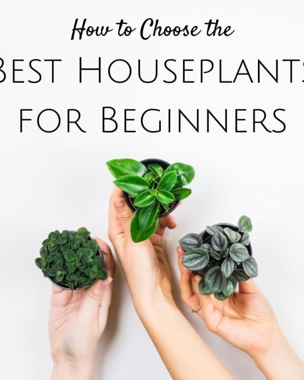 houseplants-for-beginners-how-to-choose-the-best-plant