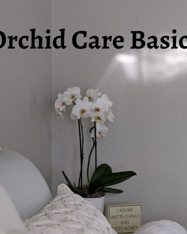 basics-of-orchid-care