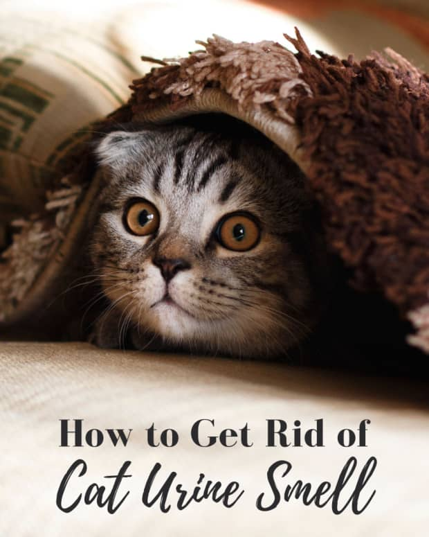 how-to-eliminate-cat-urine-smell