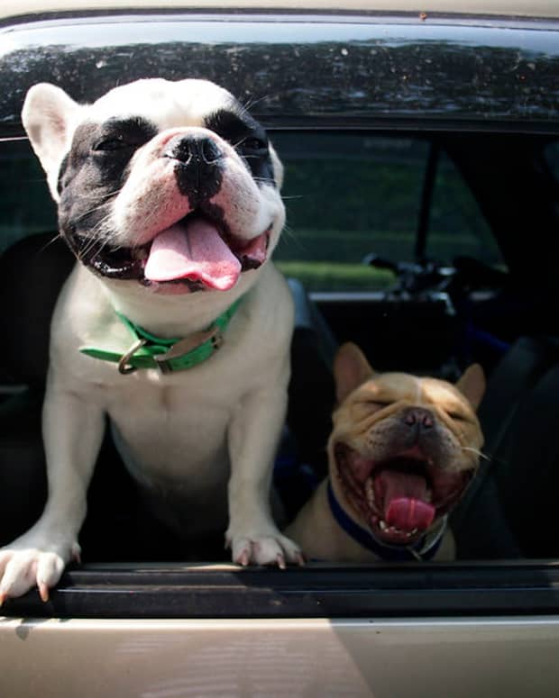 heat-stroke-in-dogs-causes-symptoms-and-prevention-during-summer
