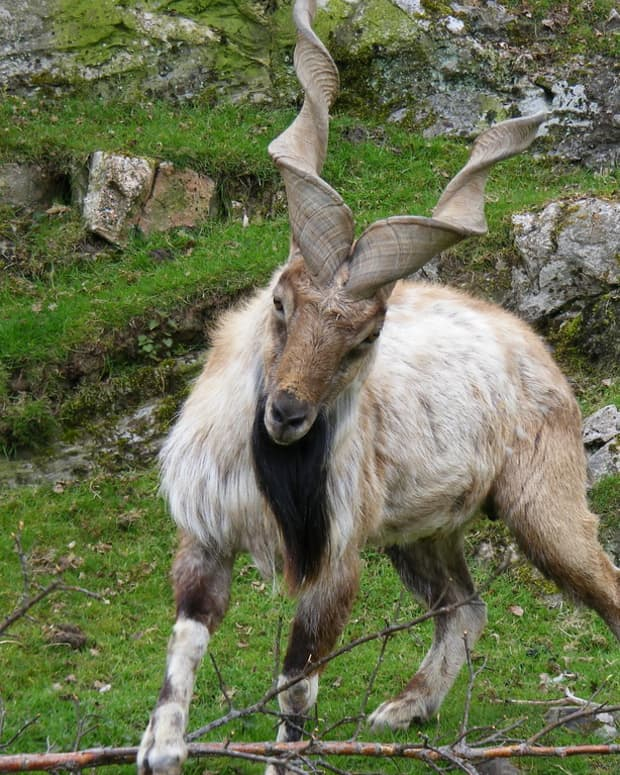 nine-endanger-species-of-animals-in-pakistan