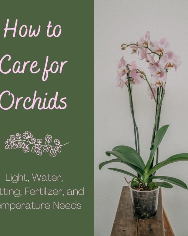 how-to-grow-and-care-for-orchids