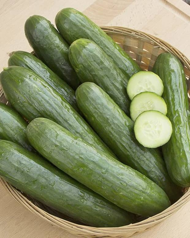 cucumbers-and-their-health-benefits
