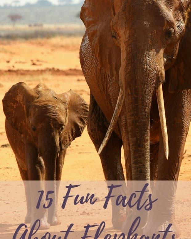 elephant-facts-for-kids-children-bedtime-stories