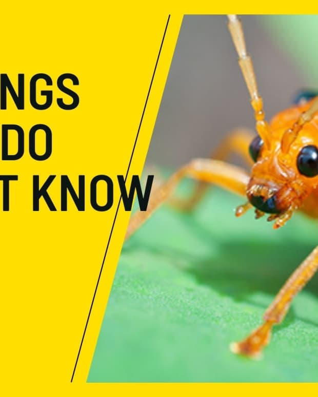top-8-things-animals-do-you-do-you-dont-know