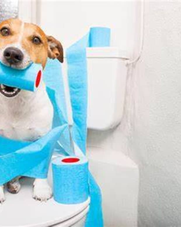 easy-and-simple-home-remedies-to-treat-constipation-in-dogs-at-home