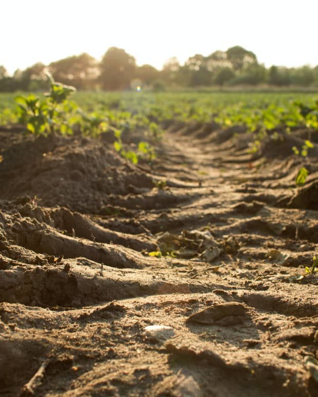 working-with-impossible-soils-how-to-avoid-the-really-hard-labor