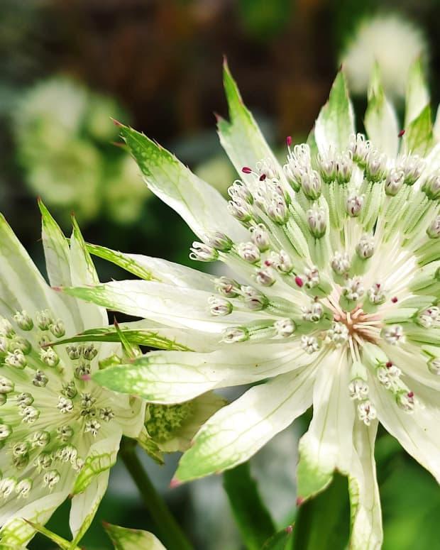 3-easy-garden-perennials-for-beginners