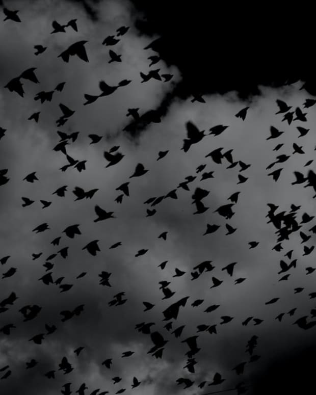 darker-side-of-nature-with-gothic-elements