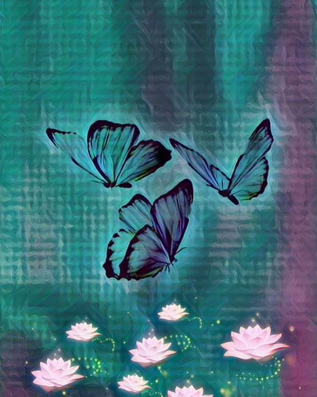 my-butterflies