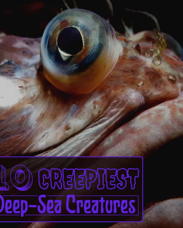 ten-creepy-deep-sea-creatures
