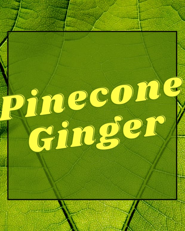 pine-cone-ginger-more-than-just-a-pretty-face-in-your-yard