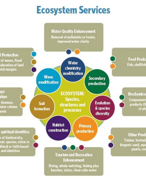 ecosystem-services-concept-and-importance