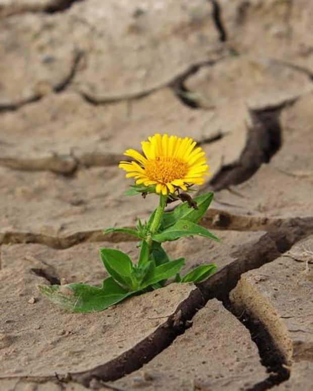 not-as-strong-as-desert-flowers-a-prose-poem