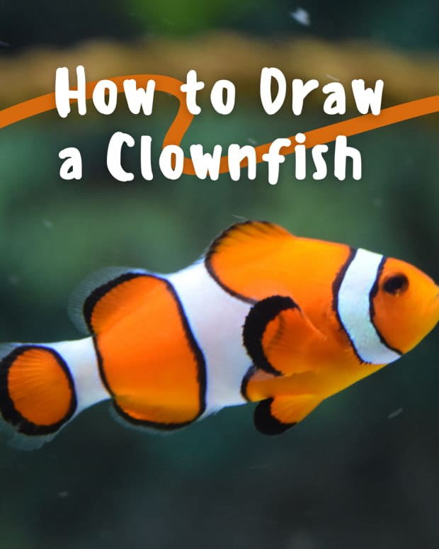 art-lesson-how-to-draw-a-clownfish